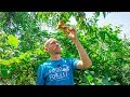 Lawn to FOOD FOREST 8 Years Later, Natural Farming Permaculture Gardening