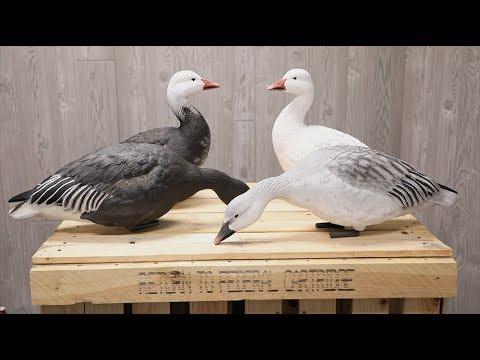 Avian-X AXP Snow Geese