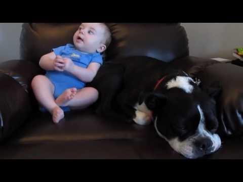 Perro se corre cuando bebe se tira un pedo!