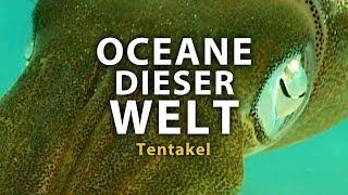 Ozeane dieser Welt - Tentakel (2011) [Dokumentation] | Film (deutsch)