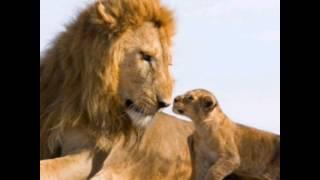 "Моё видео! ""Клип про льва""."