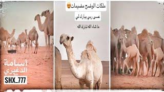 ملكات الوضح مضيمات للماك أسامة الدغيري تبارك الله