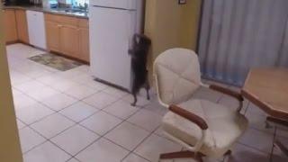 Собака достает еду из холодильника