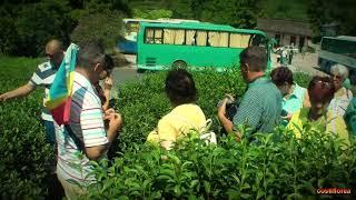 Hangzhou National Tea Museum - Trip to China part 40 - Full HD Travel Video