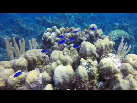 Nassau Bahamas - Stuart Cove's SCUBA Diving - 5 FEB 2015