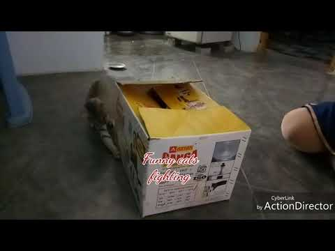 2 Cats fighting hidden inside cooker box very funny
