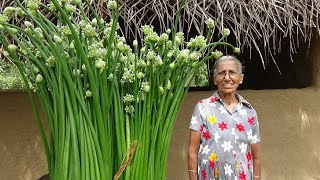 Village Food ❤ Spring Onion flower Recipe by Grandma | Village Life