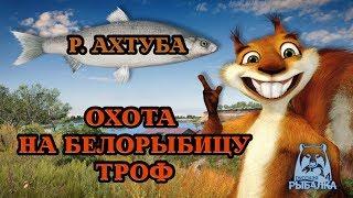 РУССКАЯ РЫБАЛКА 4 / Russian Fishing 4 18+    В ПОИСКАХ БЕЛОРЫБИЦЕ . УТРЕННИЙ СТРИМ!
