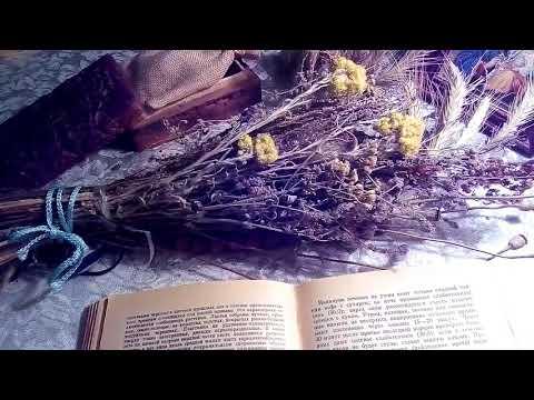 Папоротник, описание и лечебное применение по материалам книги Попова А.П.