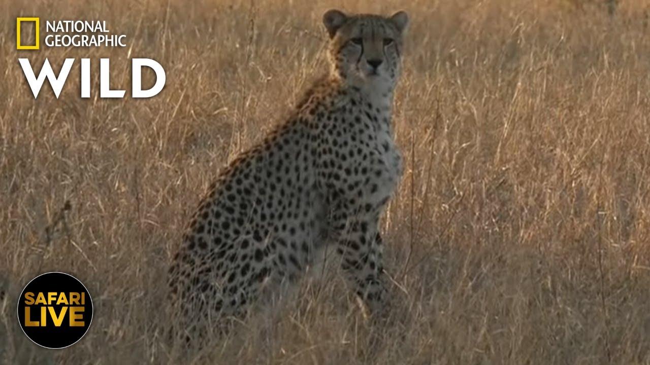 Safari Live - Day 377 | Nat Geo Wild