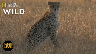 Safari Live - Day 377 Nat Geo Wild