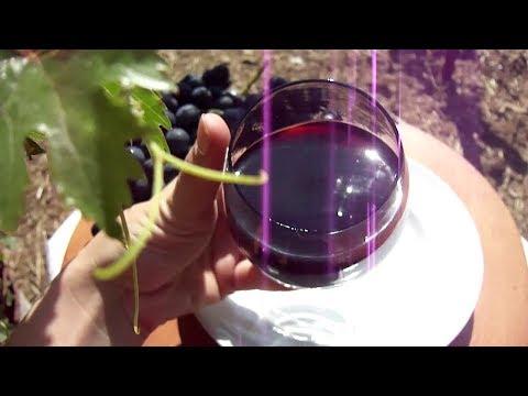 Изготовление десертного вина в домашних условиях