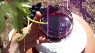 Домашнее вино Кагор. Простой рецепт.