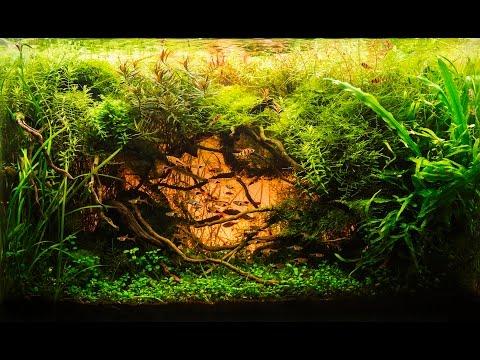 l aquarium de julien voultoury iaplc 2014 ada takashi