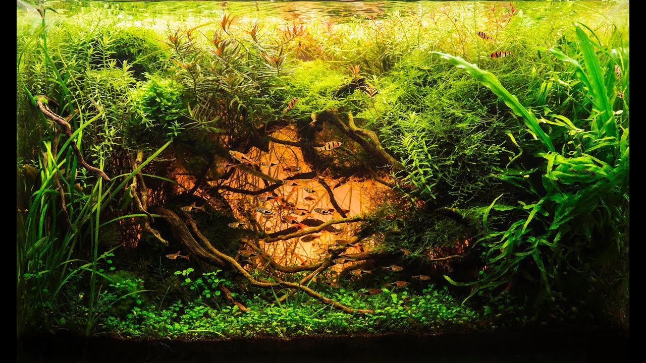 Beautiful Aquascape (The Art of the Planted Aquarium ...