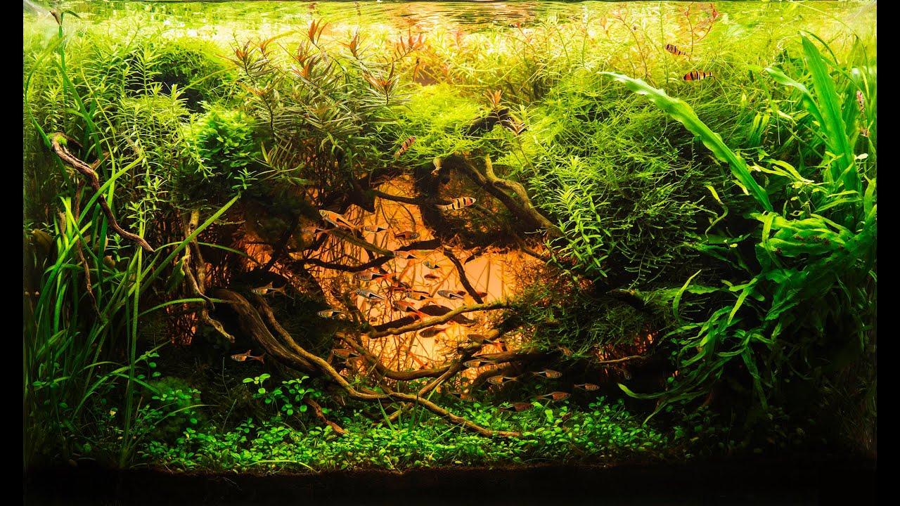 Beautiful Aquascape (The Art of the Planted Aquarium ...