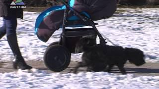 Внимание: новые правила содержания собак