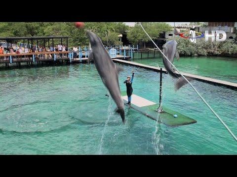 Islas del Rosario Cartagena, un viaje inolvidable