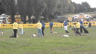 Pads Dog Training - Mod Stafford Obeinece Display Team In Main Ring