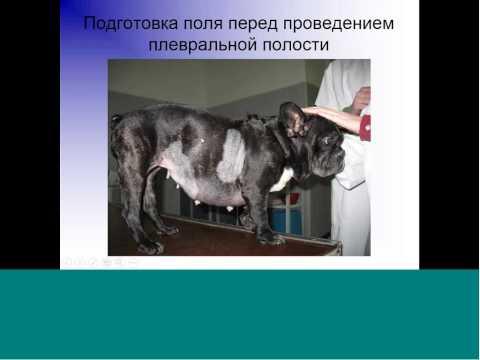 по хирургии ветеринария курс Курсовая по хирургии ветеринария 5 курс