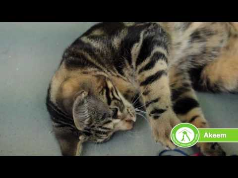 cat-playtime-at-edinburgh-dog-and-cat-home