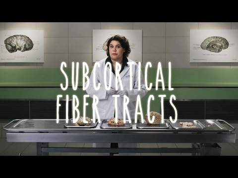 Subcortical Fiber Tracts - UBC Neuroanatomy - Season 1 - Ep 5