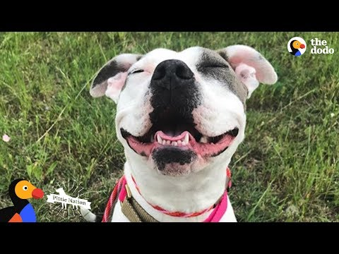 Mama Pit Bull Rescued by Family Who Drives Across The Country To Adopt Her | The Dodo Pittie Nation