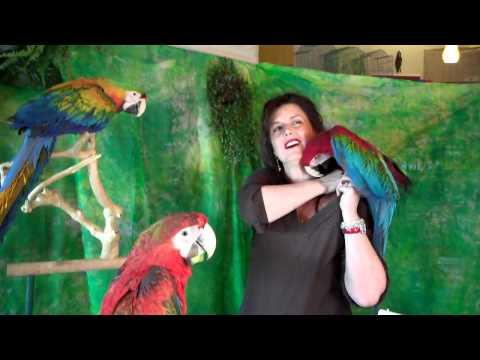 Pet Shop Parrot Antics