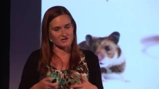 Fascinující drama vzniku nového lidského života | Zuzana Holubcová | TEDxZlín
