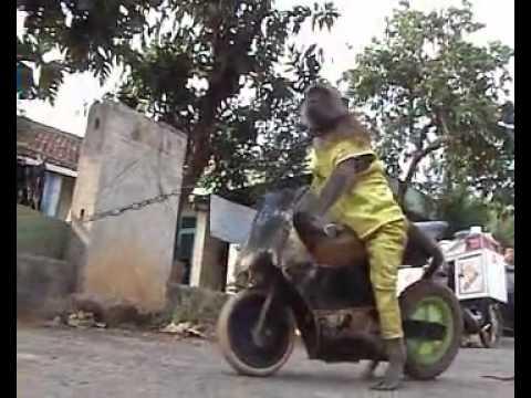 Full Download Saru Mawashi Topeng Monyet