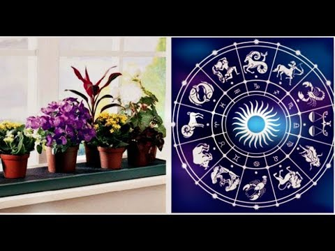 Комнатные цветы Талисманы По Знаку Зодиака! Теперь знаю, какой вазон мне нужен