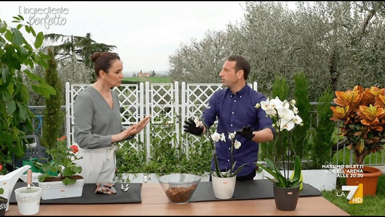 Download Far rifiorire le orchidee (e altre piante) | Rubrica Garden