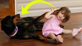 Собака оскалилась и схватила малышку, но когда мама увидела почему, она не поверила своим глазам!