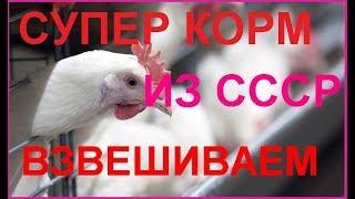 Супер корм для бройлеров из СССР, кормим, взвешиваем И делаем выводы