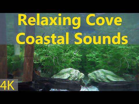 Relaxing Cove Coastal Sounds Somewhere Aquarium
