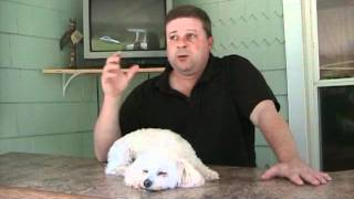 How To Get Customers For Your Dog Training Business