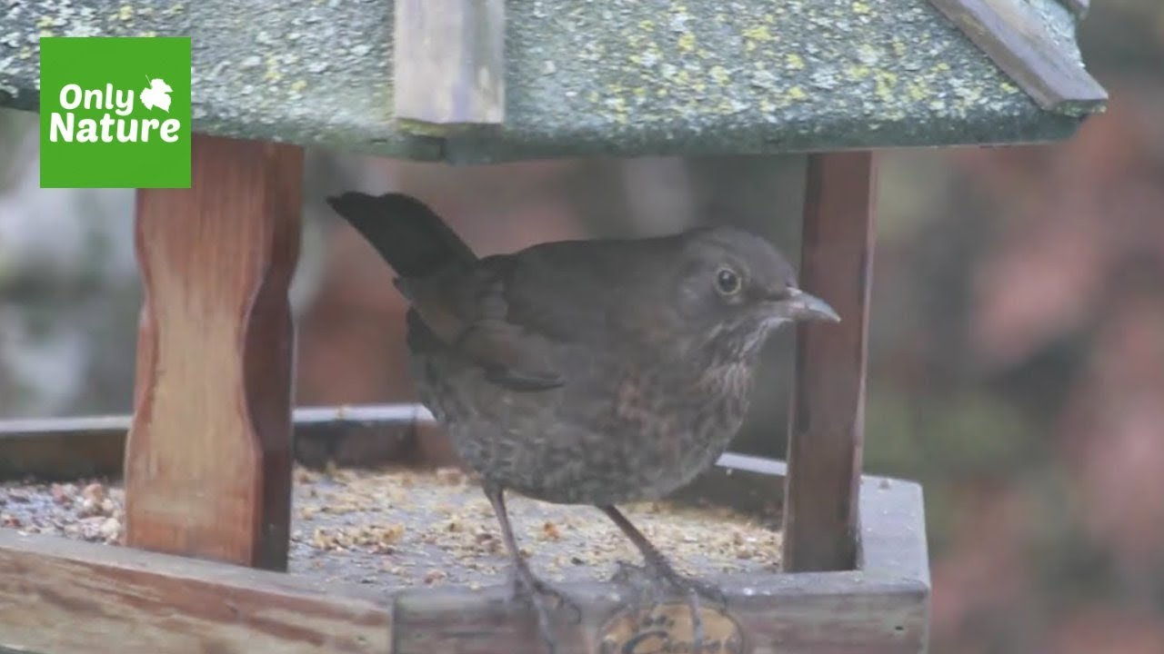 nature video uk garden birds winter youtube