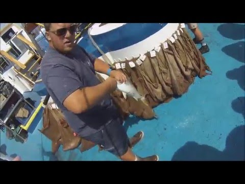Full Day Fishing at Catalina on the Fury