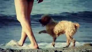Милые собаки на пляже, Одесса / Cute Dogs on the Beach, Odessa