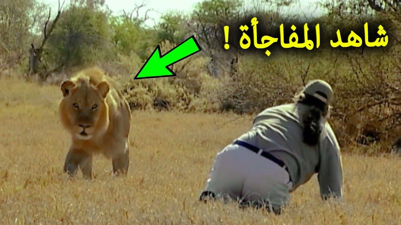 هذا الرجل قرر ان يتحدي الأسد ليهجم عليه الاسد بسرعة كبيرة .. لحظات تم تصويرها لم يصدقها احد !!