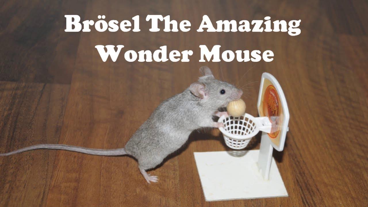 best of br sel the unbelievably smart mouse youtube. Black Bedroom Furniture Sets. Home Design Ideas