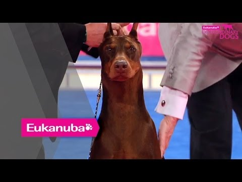 Eukanuba World Challenge Final - Part 2