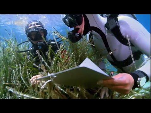 [Doku] Geheimnisse Des Meeres - Cousteaus Verlorene Welt [HD]