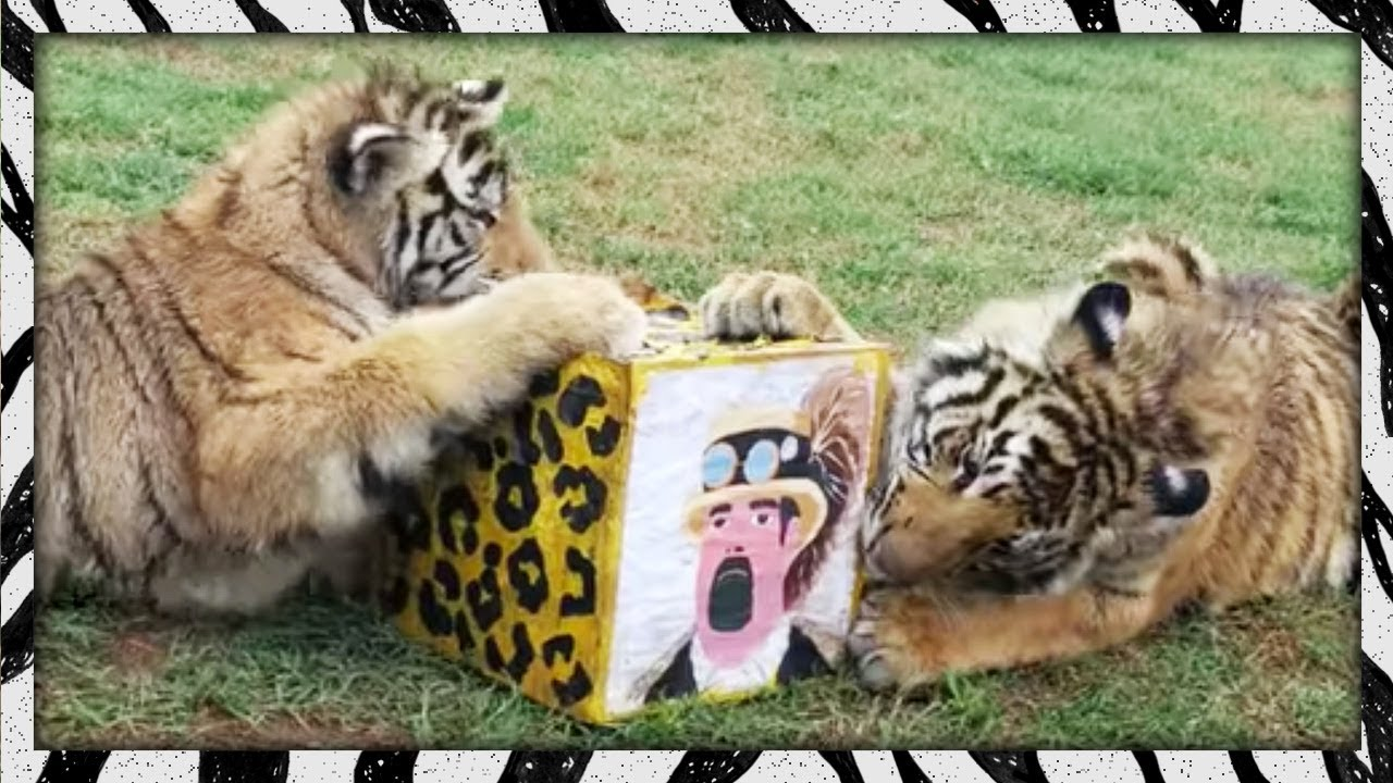 Box Head Chow Town Big Cats Love Boxes