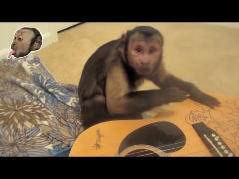 Monkey Guitar/Drum Jammin