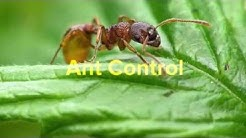 Pest Control Blue Mound TX 76131 Bed Bugs