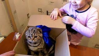 К нам пришла посылка, а там котенок!