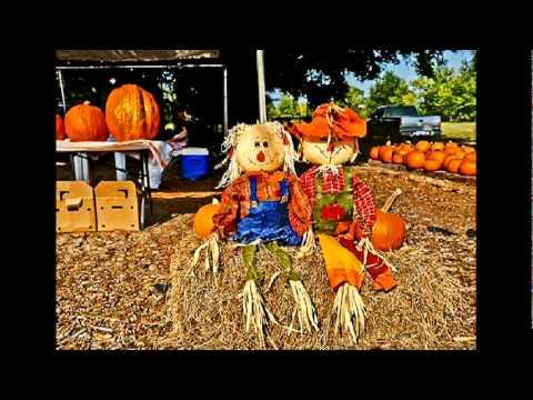 Pumpkin patch fundraiser successful in second year