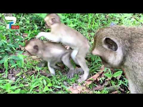 Top 2 Monkey Video - Monkey Meeting Beautiful girl at Angkor Wat - Funny Monkeys Meeting