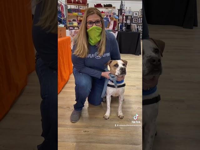 Store invites homeless dog to go shopping